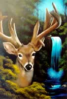 waterfall buck