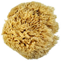 Royal Wool Sponge, 7-8""
