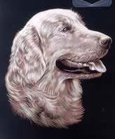 Reeves Copperfoil - Retriever