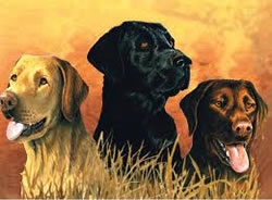 Labs in Marsh Artists Collection Paint by Numbers