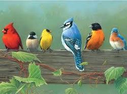 Rail Birds Artists Collection Painting by Numbers