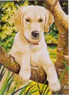 Labrador Medium Paint by Number Set