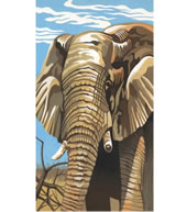 Elephant Reeves Paint by Number Set