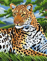Leopard, Medium Painting by Number